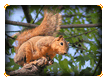 Squirrel in a Tree Online Jigsaw Puzzle for Kids